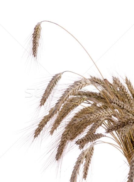 Olgun kulaklar buğday beyaz gıda sonbahar Stok fotoğraf © pixelman
