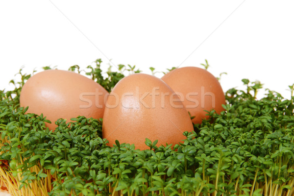 Ovos fresco verde três ovos de páscoa isolado Foto stock © pixelman