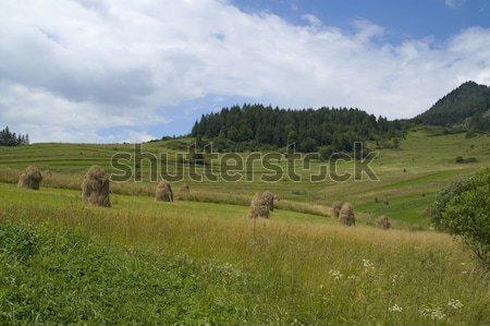 Sheafs in mountain Stock photo © pixelman