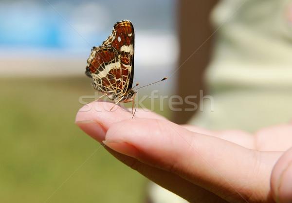Kelebek el güzel oturma palmiye Stok fotoğraf © pixelman