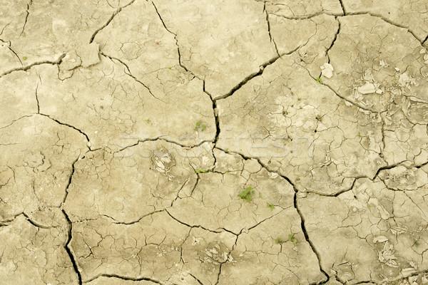 области засуха подробность земле долго Сток-фото © pixelman