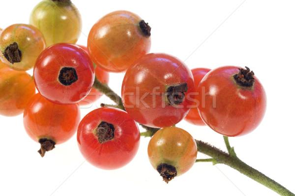 Kırmızı frenk üzümü yalıtılmış gıda beyaz Stok fotoğraf © pixelman