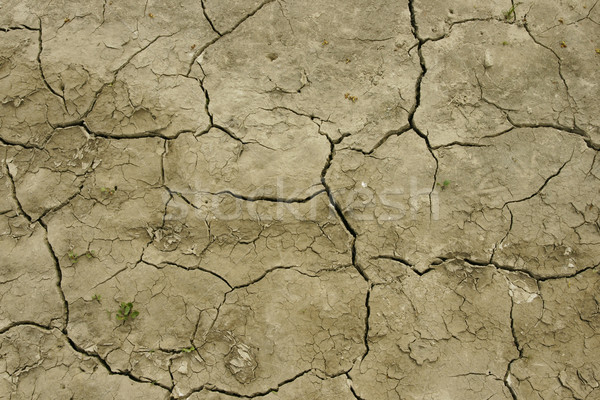 Field after drought Stock photo © pixelman