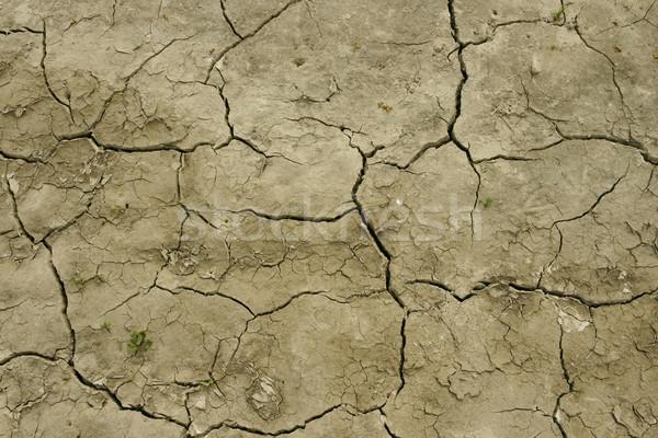 Campo seca pormenor terra longo Foto stock © pixelman