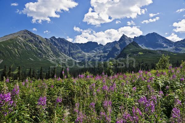 Belo vale montanhas natureza paisagem rocha Foto stock © pixelman