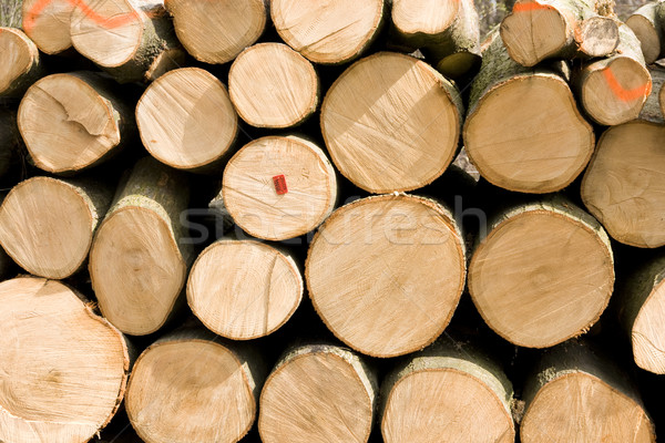 Spruce Logs Piled Up in Forest Stock photo © pixelman