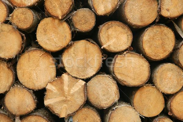 Madera resumen árboles anillo madera Foto stock © pixelman