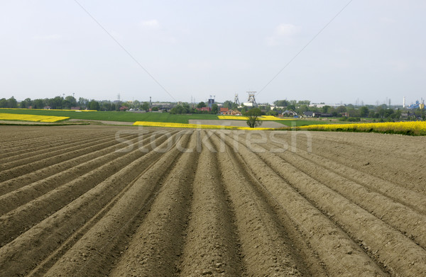 Plowed field  Stock photo © pixelman