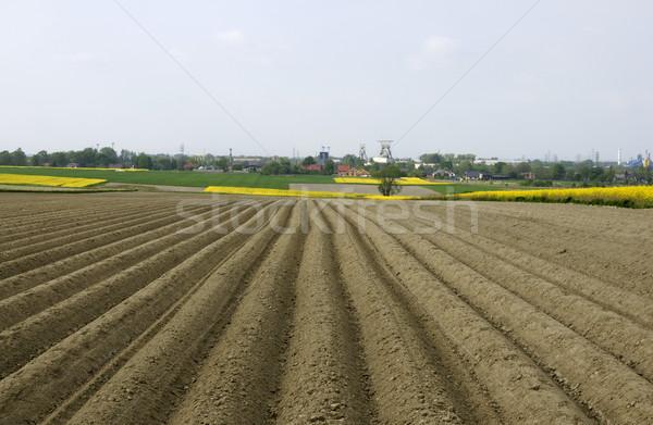 Domaine de pomme de terre campagne alimentaire légumes horizon Photo stock © pixelman