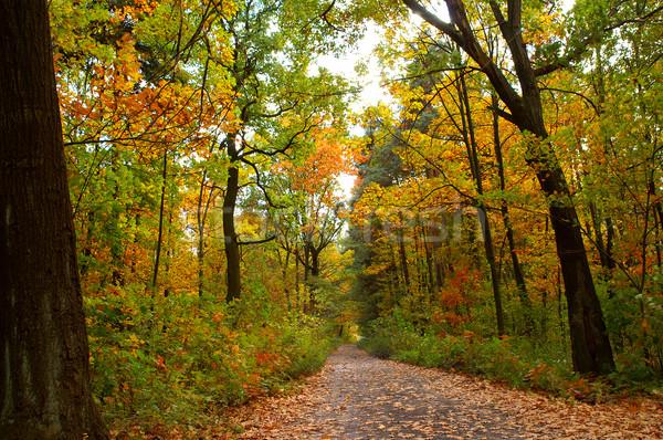 Autumn road Stock photo © pixelman