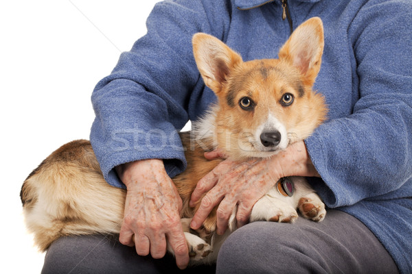 old hands and young puppy Stock photo © PixelsAway