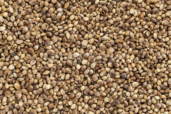 hemp seed Stock photo © PixelsAway