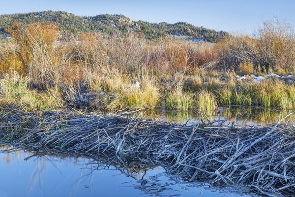 beaver swamp in Colorado Stock photo © PixelsAway