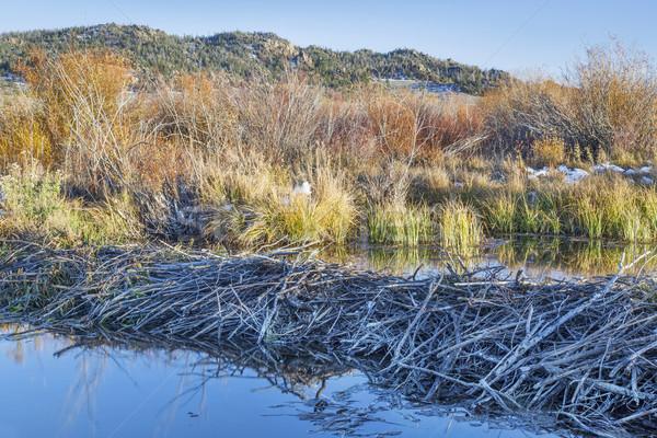 бобр болото Колорадо север реке Сток-фото © PixelsAway