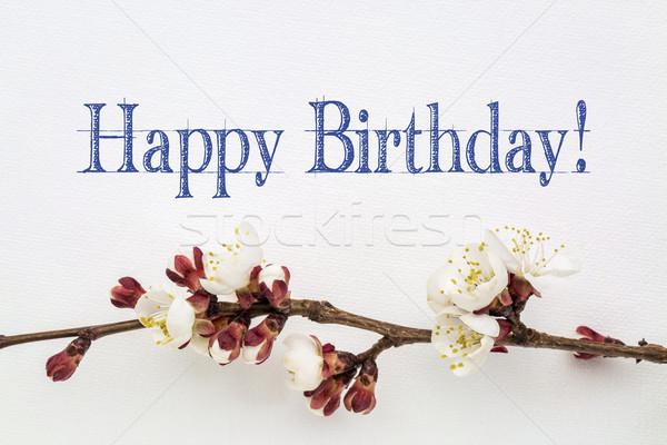 С Днем Рождения абрикос цветок почерк белый искусства Сток-фото © PixelsAway