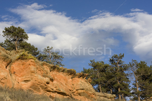 Sandstone cliffs and pine trees in Colorado Stock photo © PixelsAway