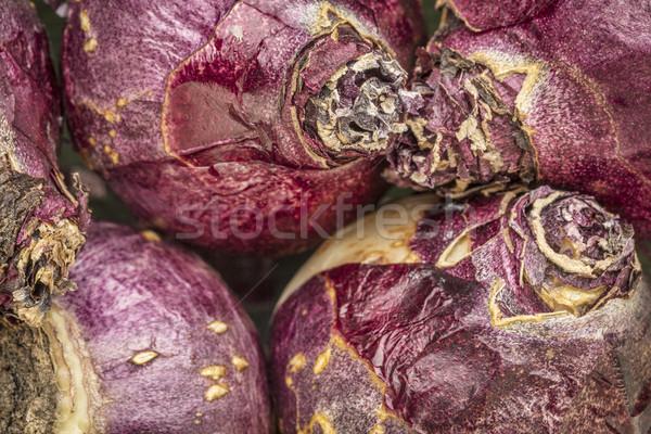 Foto stock: Jacinto · abstrato · textura · pronto · cair