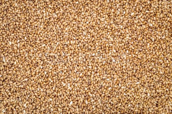 Foto stock: Grão · sem · glúten · importante · comida · Etiópia · Eritreia