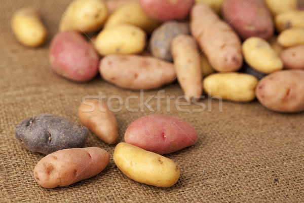 fingerling potato variety Stock photo © PixelsAway