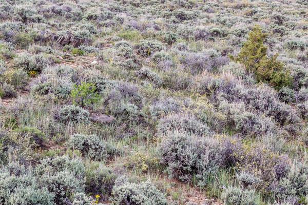 Полевые цветы другой север парка Колорадо рано Сток-фото © PixelsAway