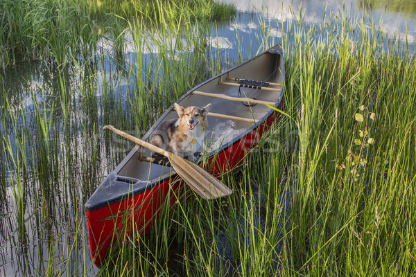 Corgi dog in a canoe Stock photo © PixelsAway