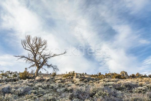 tree, sagebrush and rocks Stock photo © PixelsAway