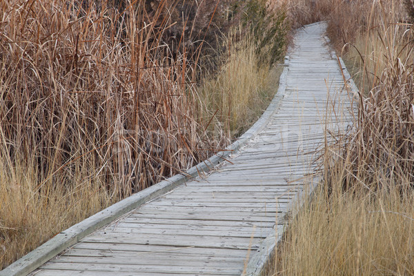 nature trail in wetland Stock photo © PixelsAway