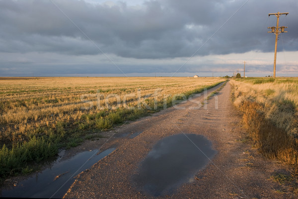 farm road in north eastern Colorado after rain storm Stock photo © PixelsAway