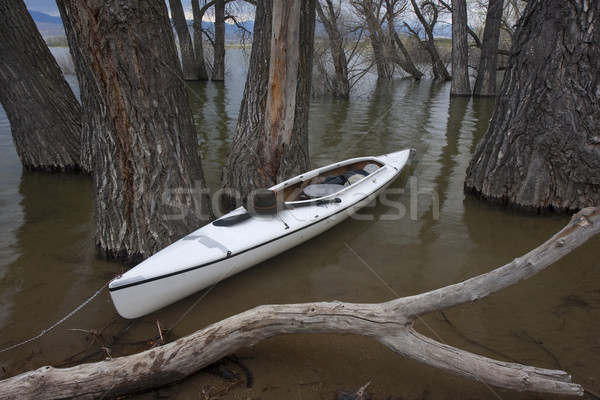 white canoe on lake with submerged forest Stock photo © PixelsAway