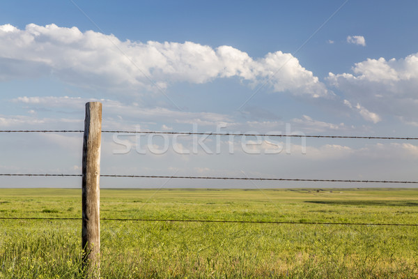 barbed wire cattle fence Stock photo © PixelsAway