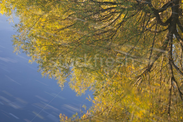 gold and blue water reflection Stock photo © PixelsAway