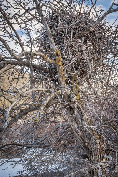 巣 乱雑な スティック ツリー 冬 木材 ストックフォト © PixelsAway