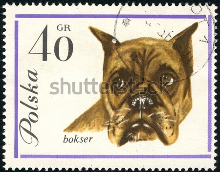 Airedale Terier in a vintage, canceled post stamp from Poland Stock photo © PixelsAway