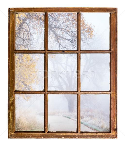 foggy autumn scene Stock photo © PixelsAway