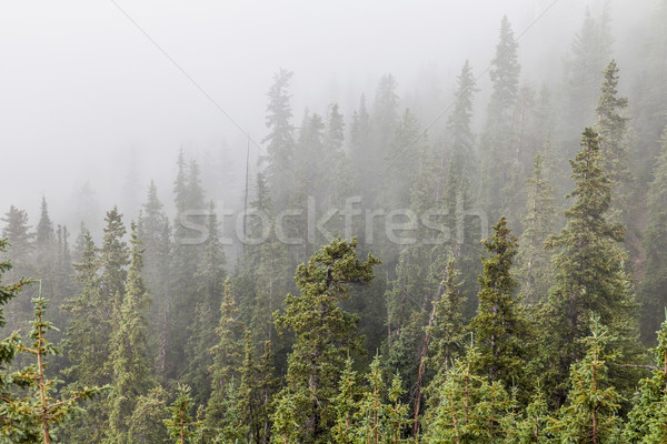 mountain forest in fog Stock photo © PixelsAway