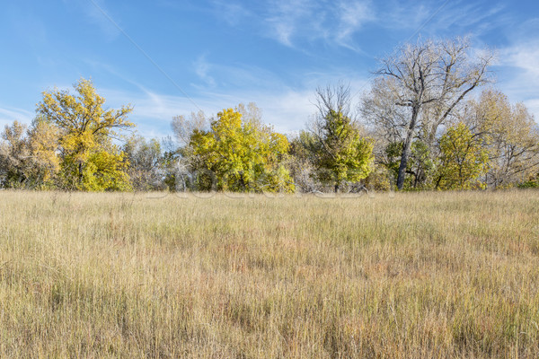 prairie fall scenery Stock photo © PixelsAway