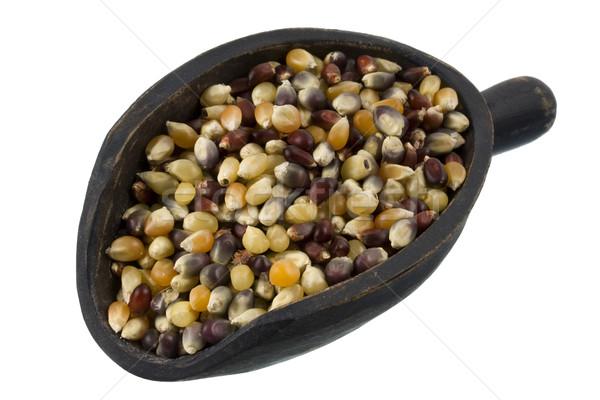 scoop of multicolor indian corn kernel Stock photo © PixelsAway
