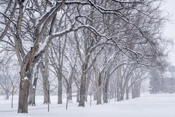Geçit eski karaağaç ağaçlar üniversite kampus Stok fotoğraf © PixelsAway