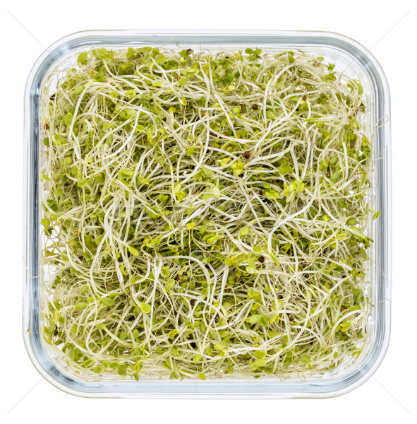 broccoli and radish sprouts  Stock photo © PixelsAway