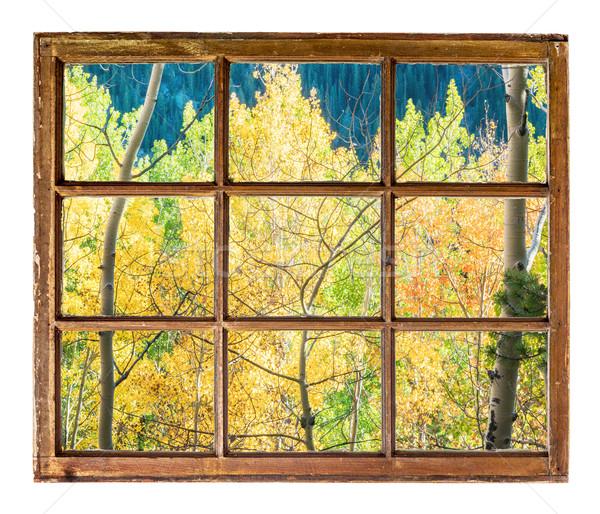 aspen trees window view Stock photo © PixelsAway