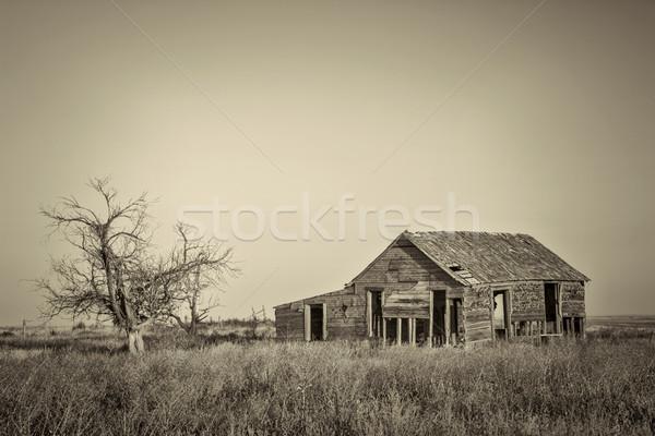 Velho pradaria abandonado falcão oriental platina Foto stock © PixelsAway