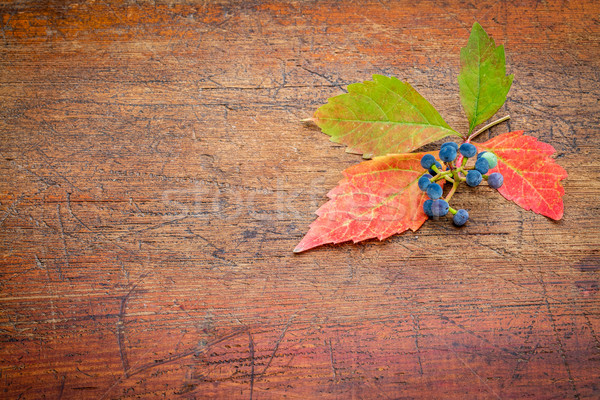 fall decoration background Stock photo © PixelsAway