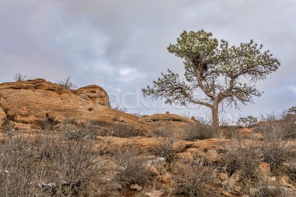 сосна утес гнезда песчаник парка форт Сток-фото © PixelsAway