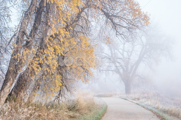 foggy November morning on bike trail Stock photo © PixelsAway