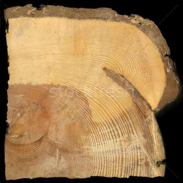 pine tree rings growing around fire scar Stock photo © PixelsAway