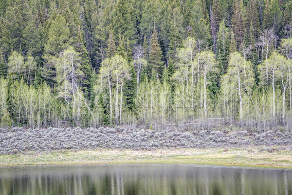 aspen, sagebrush, and spruce with water reflection Stock photo © PixelsAway