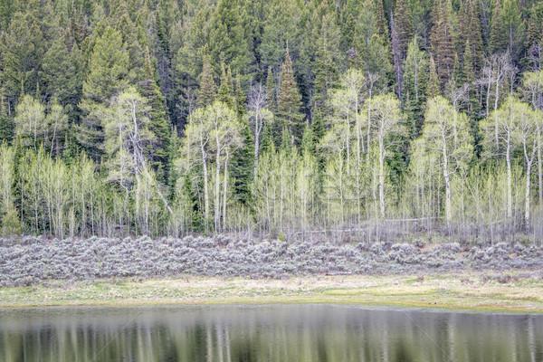 Enfeitar água reflexão cedo primavera cenário Foto stock © PixelsAway
