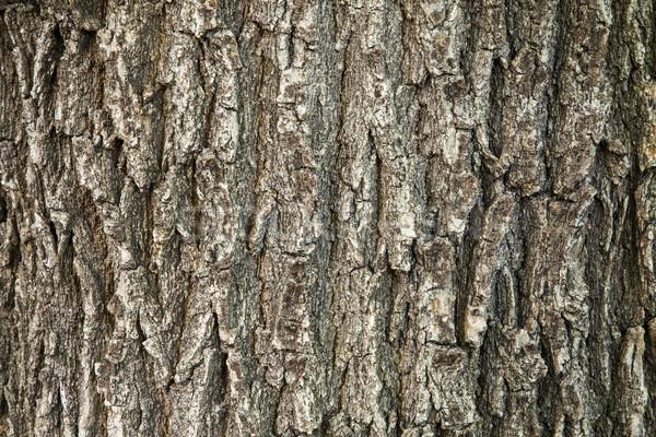 Chêne écorce texture vertical modèles Photo stock © PixelsAway