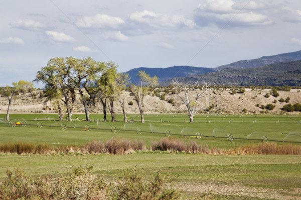 irrigated meadow in mountain valley Stock photo © PixelsAway