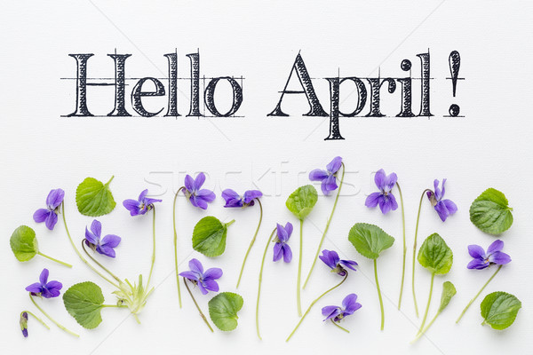 Hello April greetings with viola flowers Stock photo © PixelsAway
